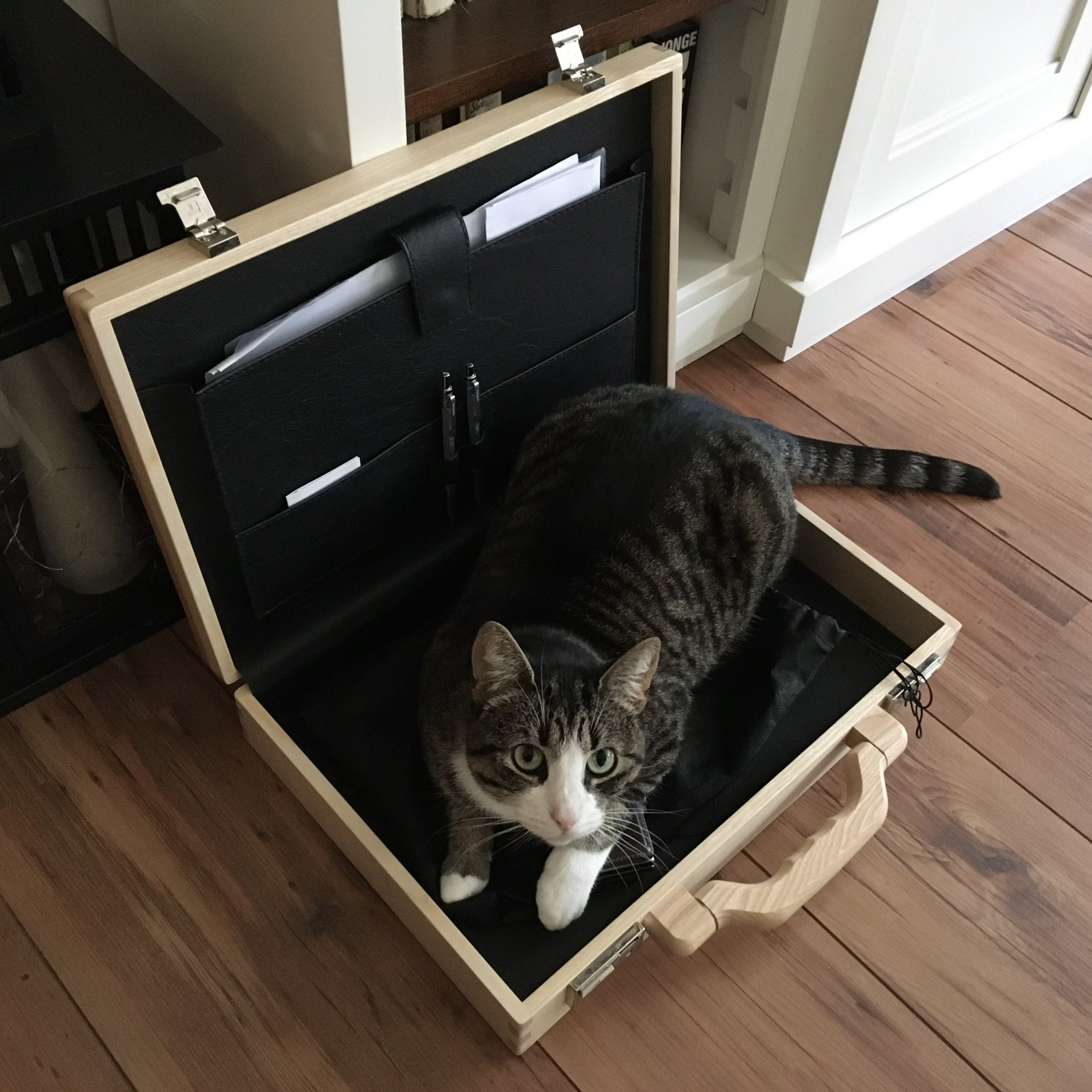 cat-in-briefcase-2000